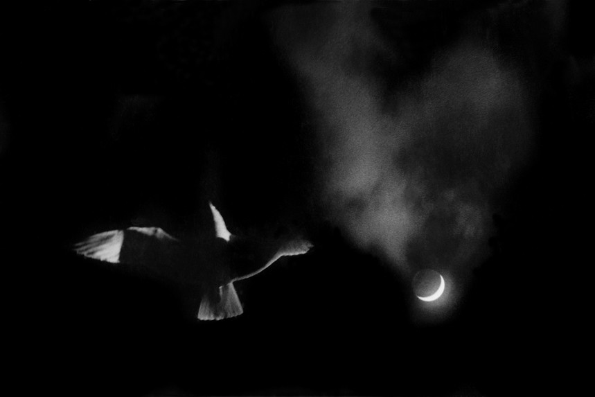 Gull and Moon