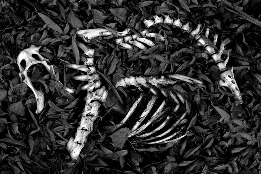 Skeleton - Vision
