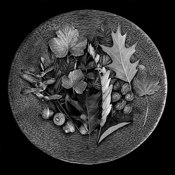 Plate of Leaves - Vision