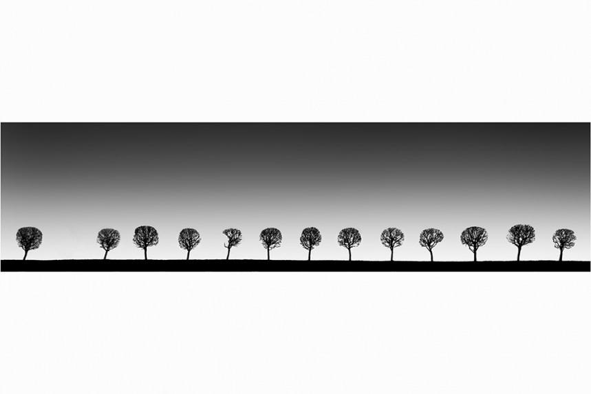 Peterhof Trees - Vision