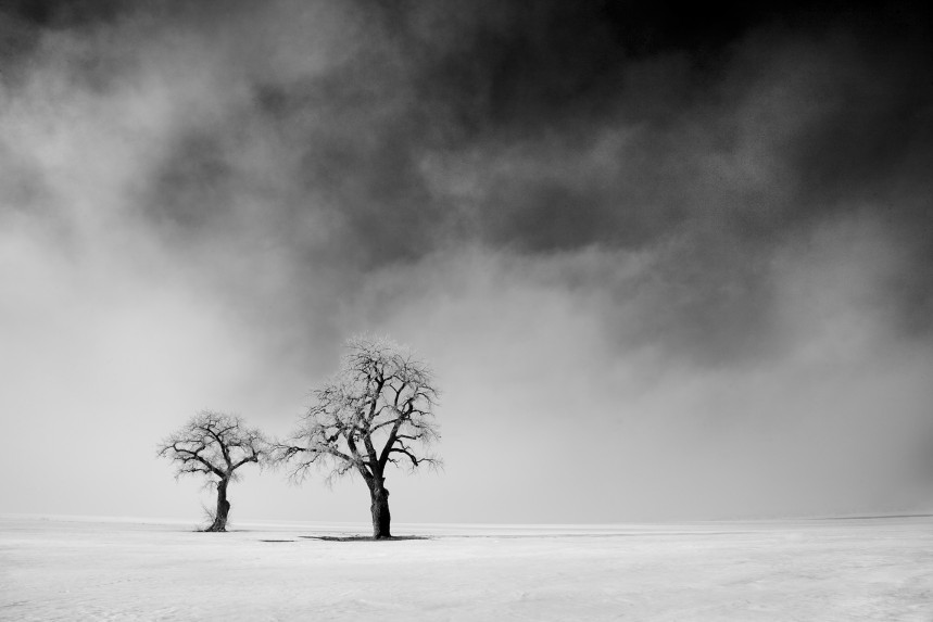Two Trees in Lifting Fog