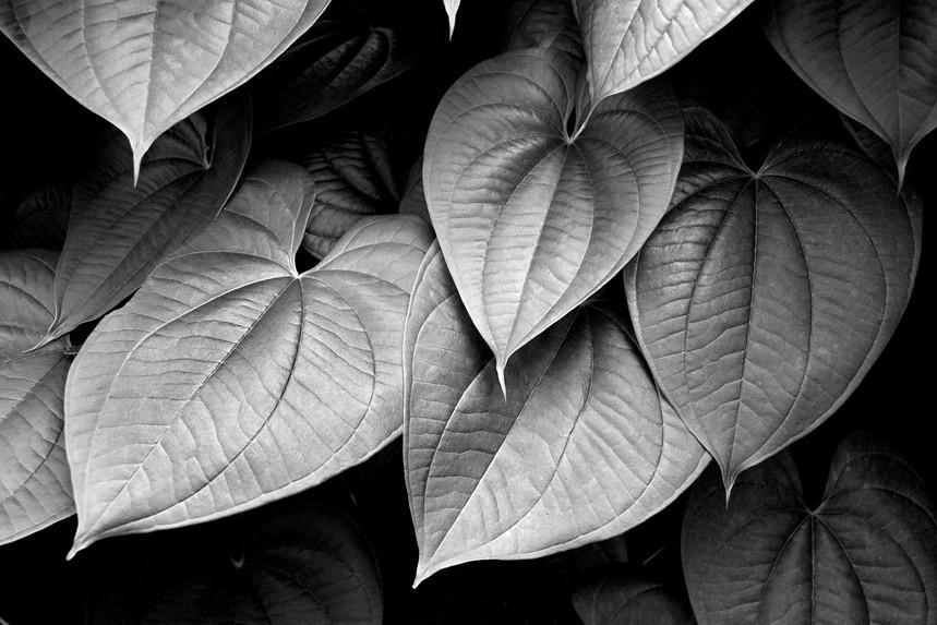 Leaves Horizontal