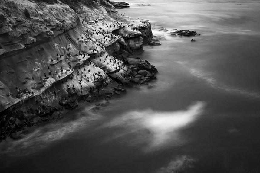 La Jolla Birds and Cliffs No 4