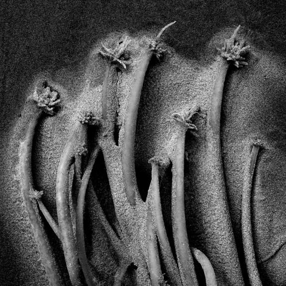 Seaweed Detail No 4