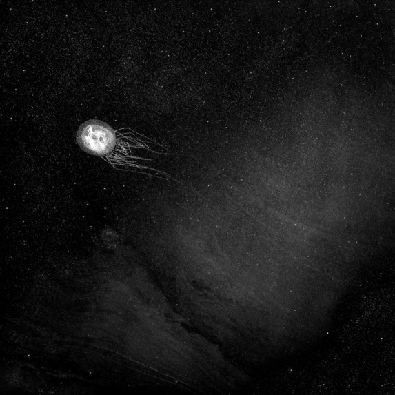 The Cnidaria Galaxy