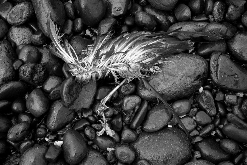 Dead Bird on Beach