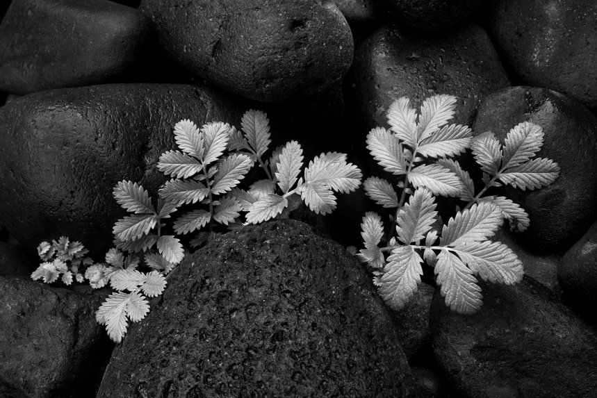 Plant and Rock Detail