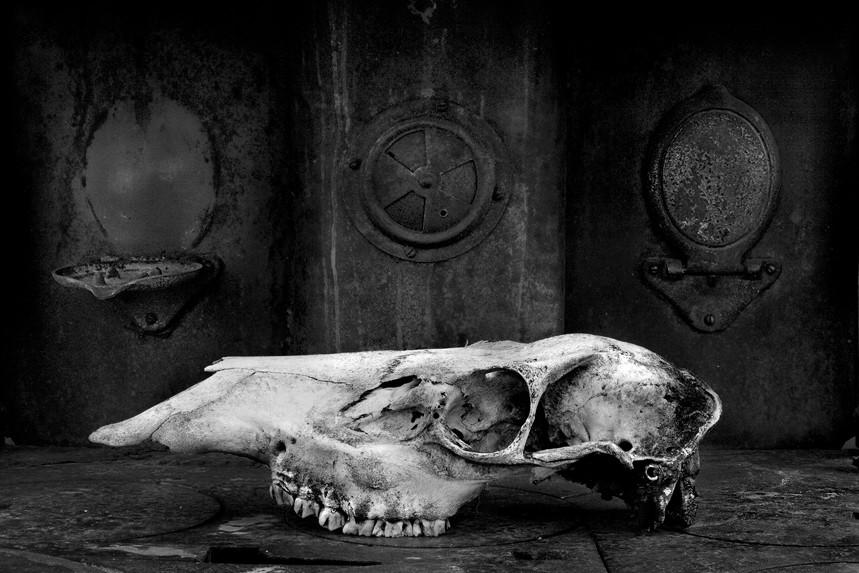 Skull on Stove