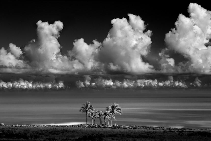 Palms, Rapa Nui