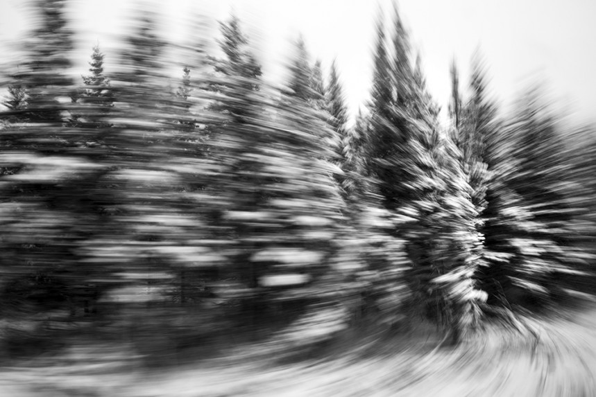 Trees From a Train No 12