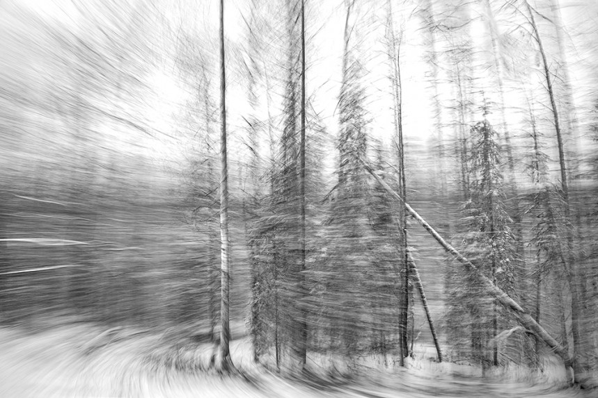 Trees From a Train No 121