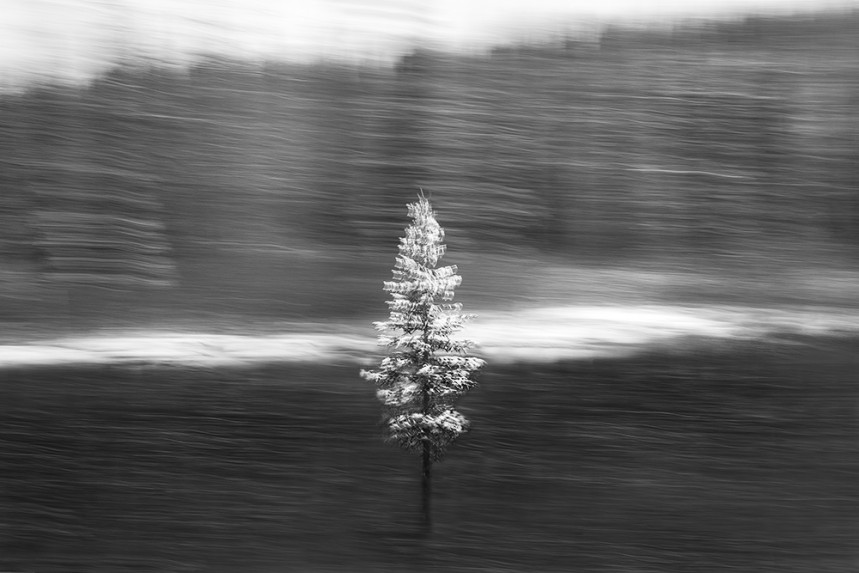Trees From a Train No 123
