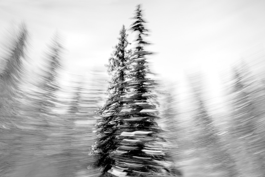 Trees From a Train No 126