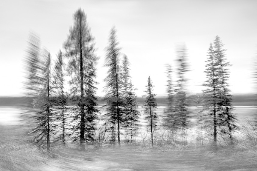 Trees From a Train No 131