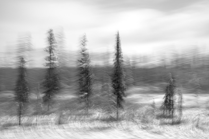 Trees From a Train No 132