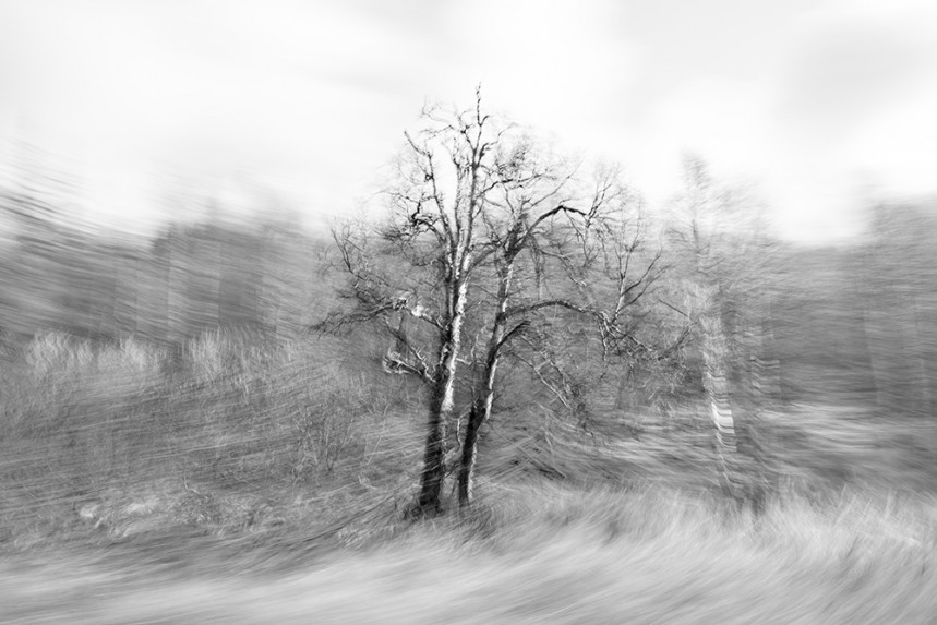 Trees From a Train No 135