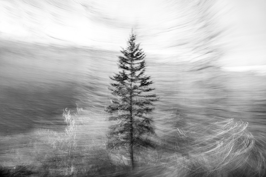 Trees From a Train No 138