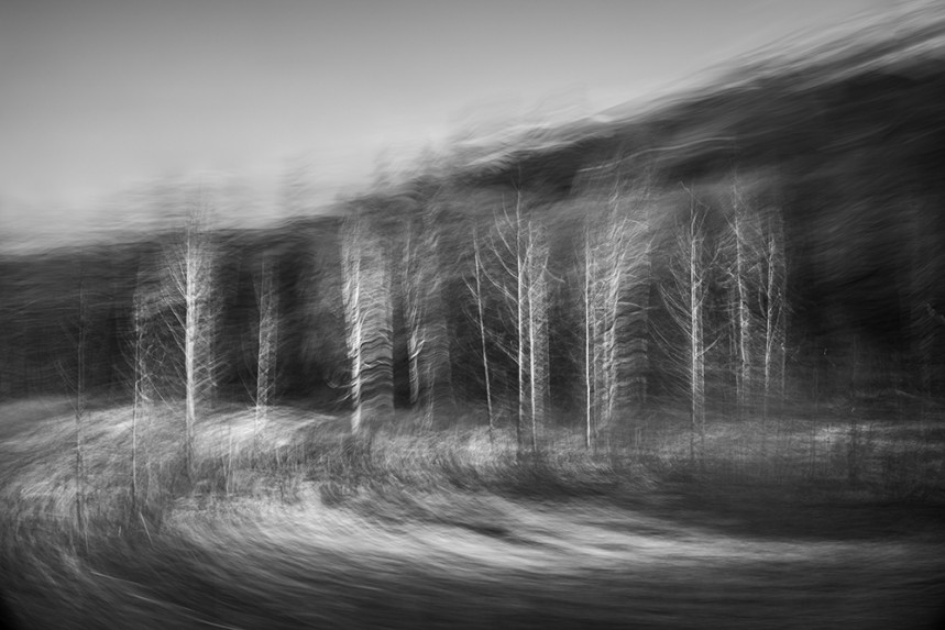 Trees From a Train No 147