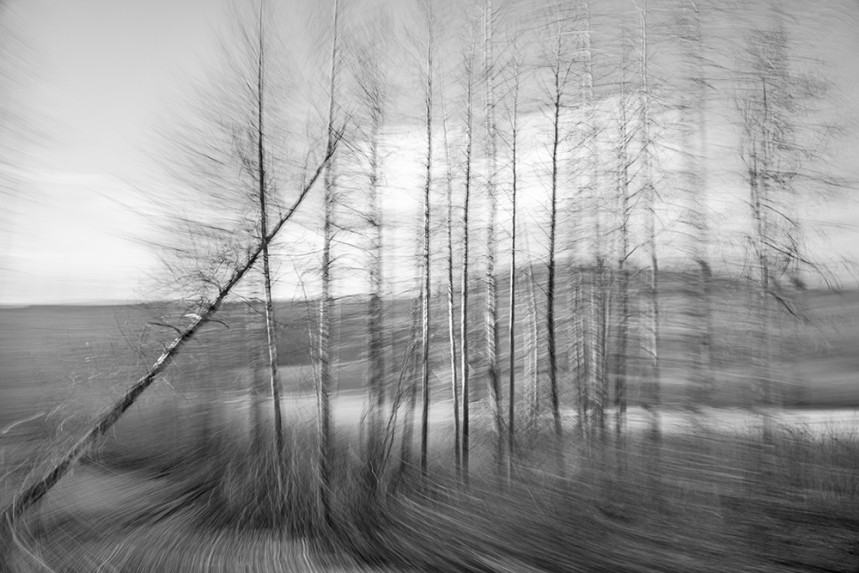 Trees From a Train No 153