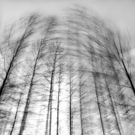 Trees From a Train No 161