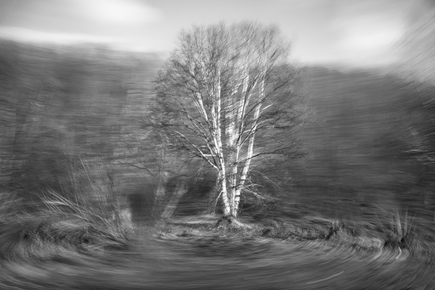 Trees From a Train No 163
