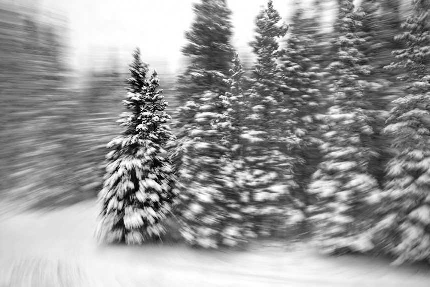 Trees From a Train No 30