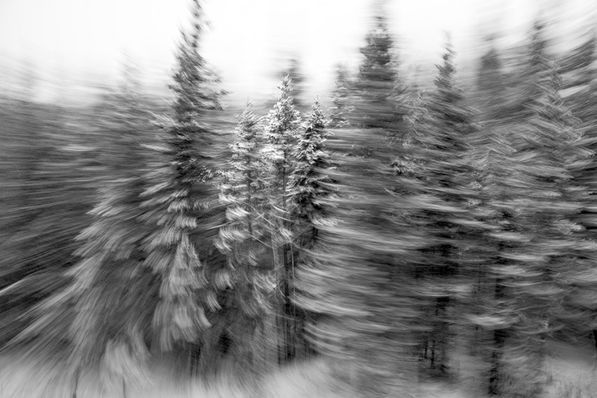 Trees From a Train No 42