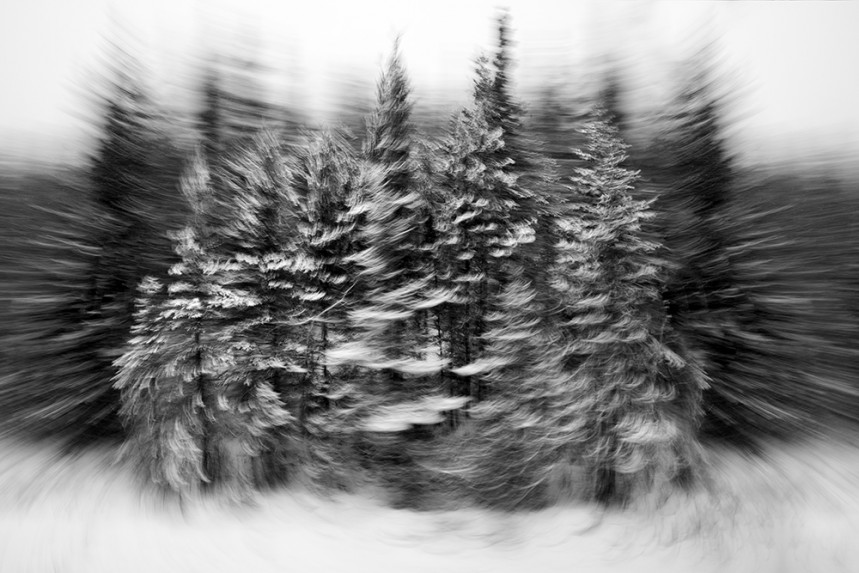Trees From a Train No 44