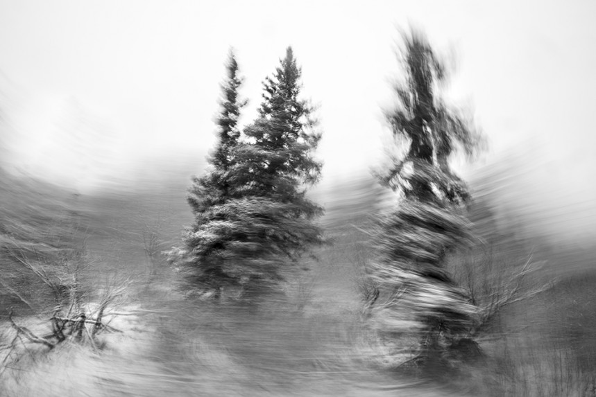 Trees From a Train No 49