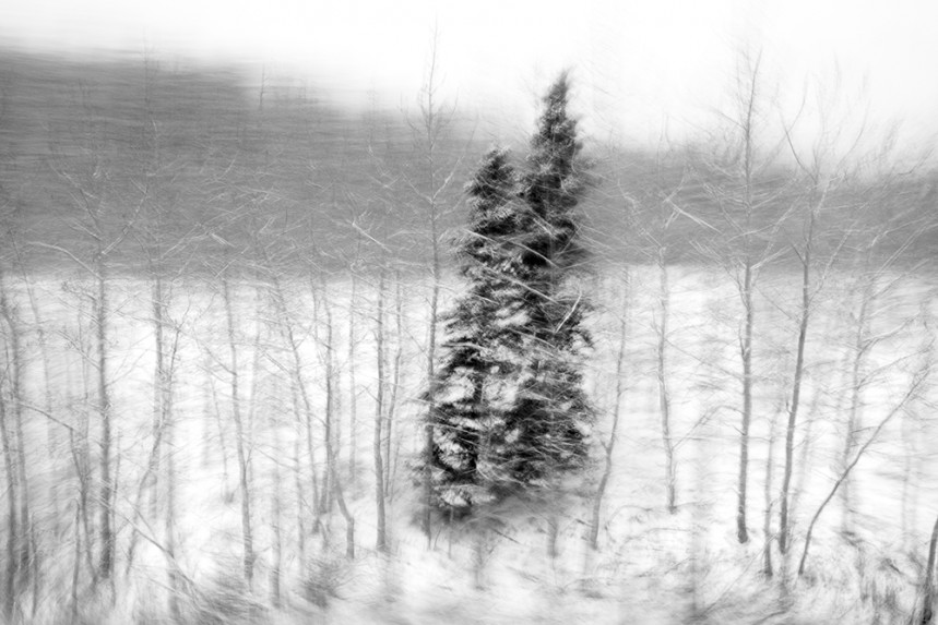 Trees From a Train No 52