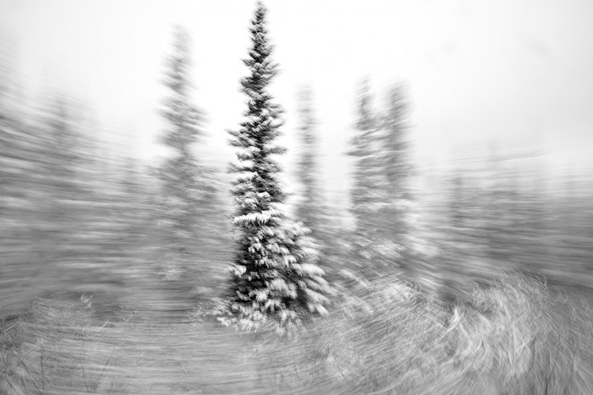 Trees From a Train No 53