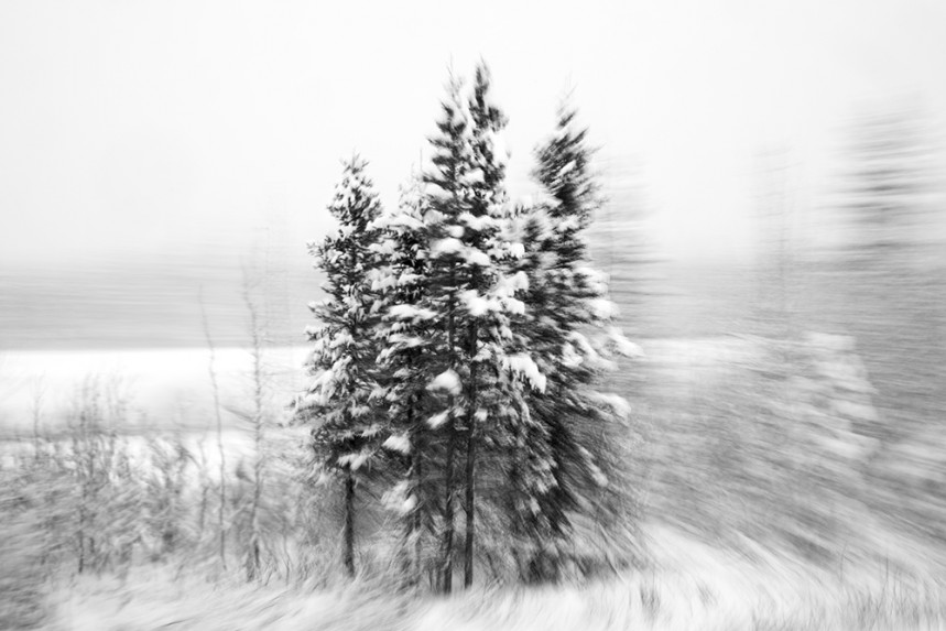 Trees From a Train No 62
