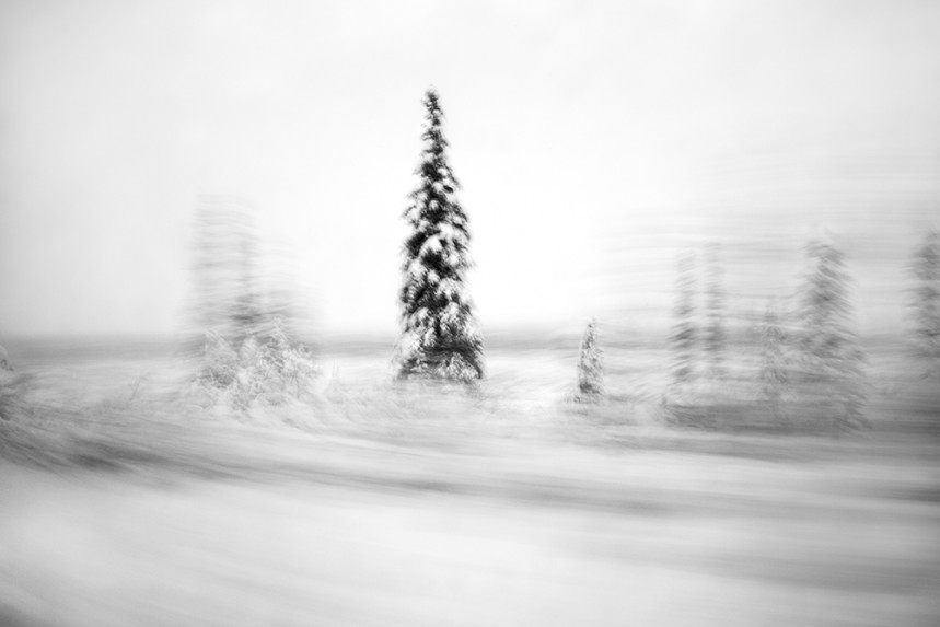 Trees From a Train No 73