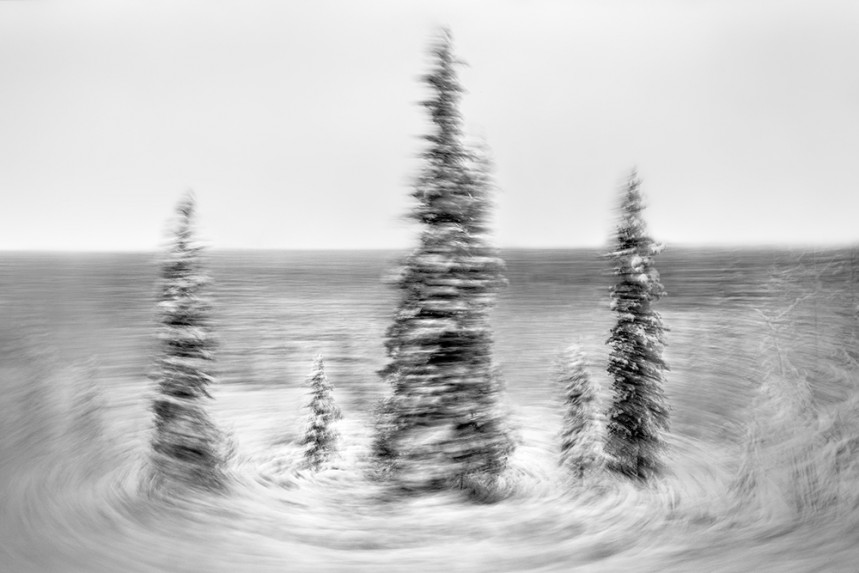 Trees From a Train No 95