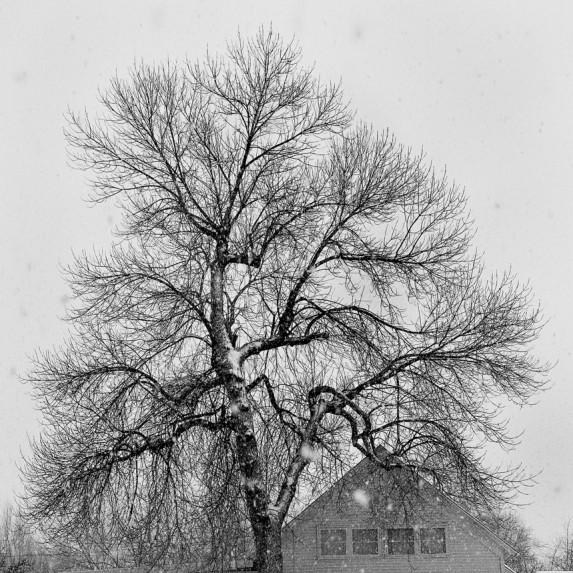 Tree in Snowstorm