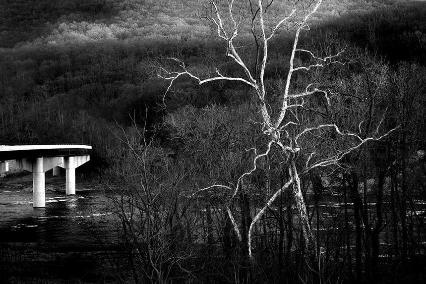 Old Tree, New Bridge
