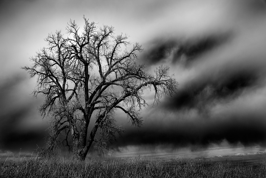Cottonwood and Storm