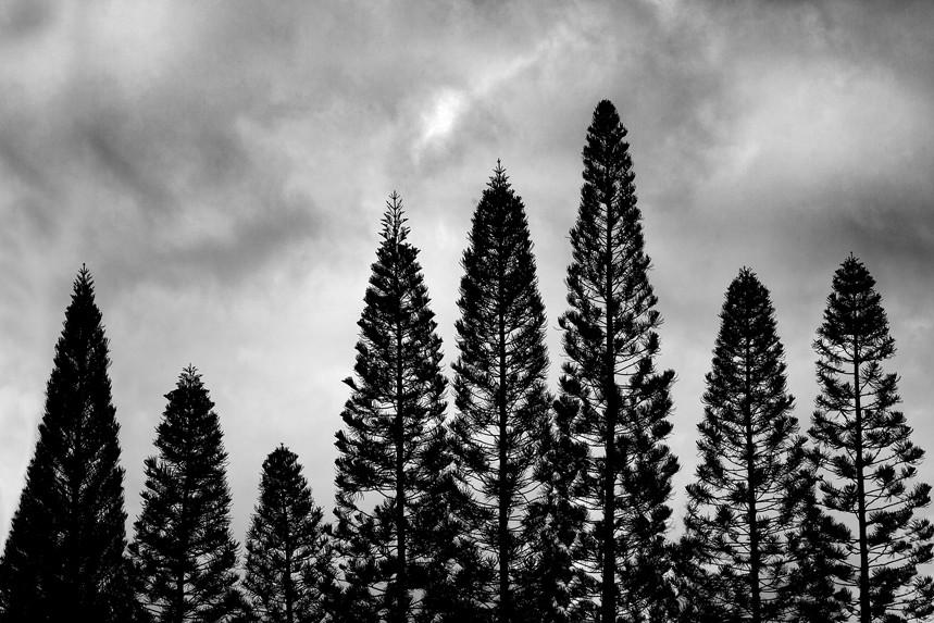 Eight Trees