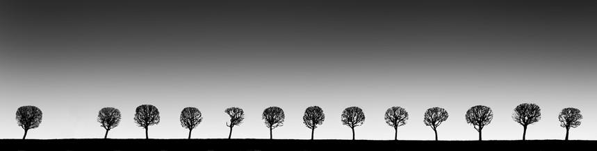Peterhof Trees 1