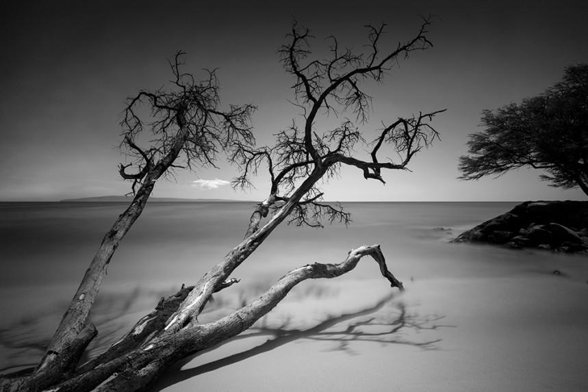 Dead Tree in Water, Maui