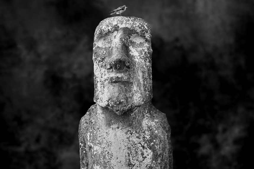 moai sitting for portrait no. 2