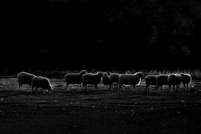 Simple Black and White Photography - Dark Sheep